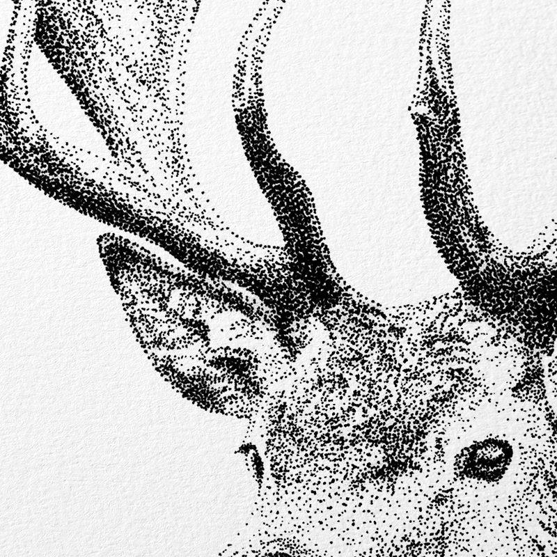 detail Fine Forest illustratie edelhert