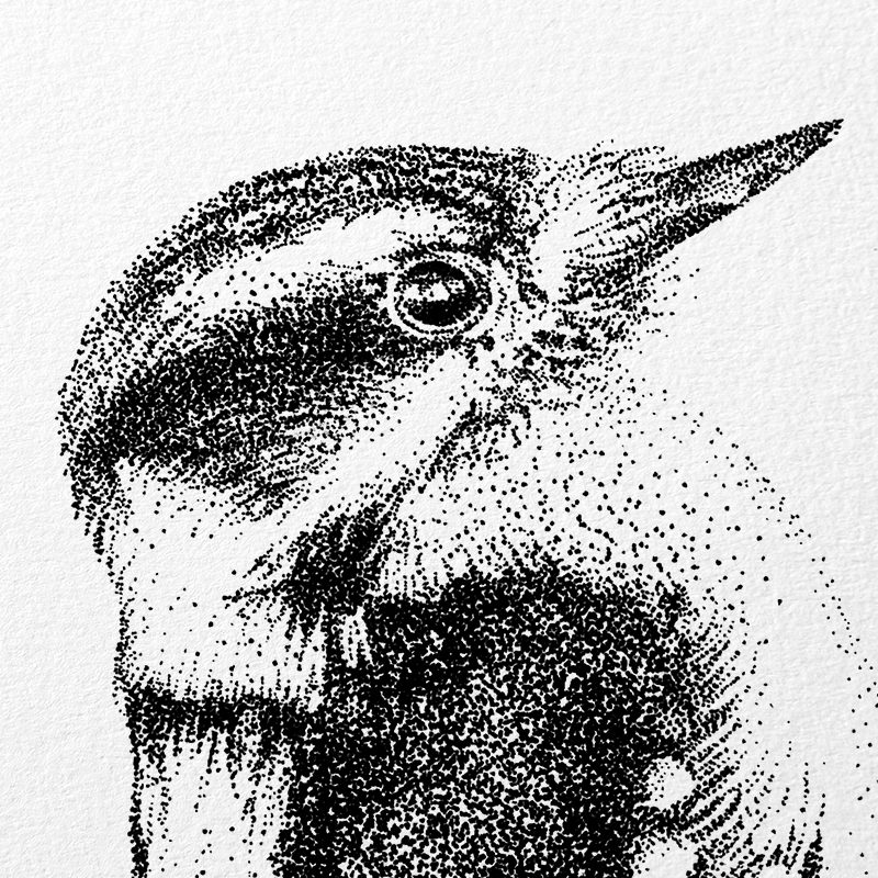 detail Fine Forest illustratie donsspecht