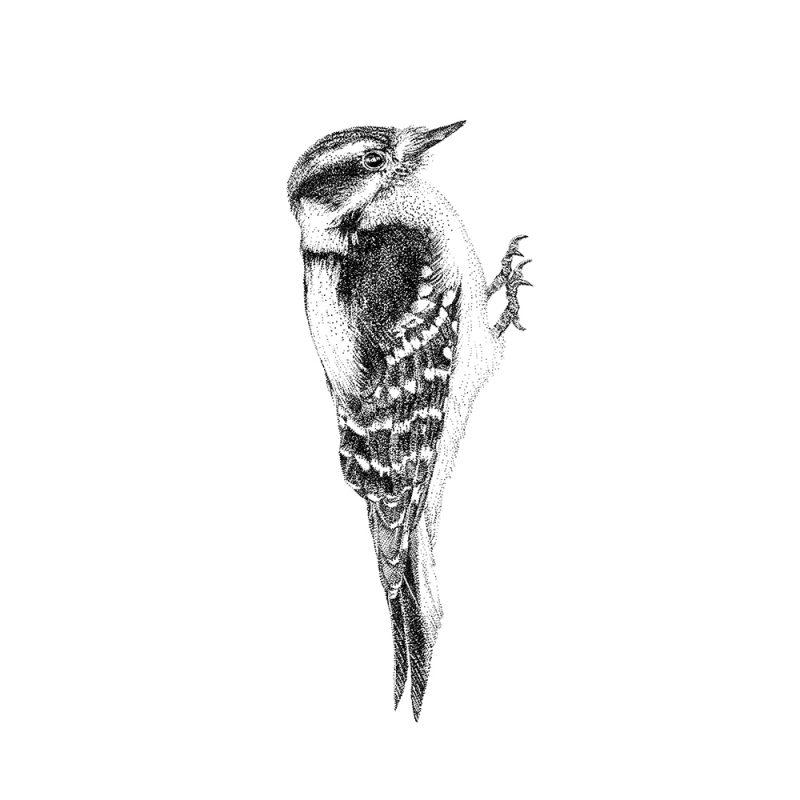 Fine Forest muurstickers, illustratie specht vogel