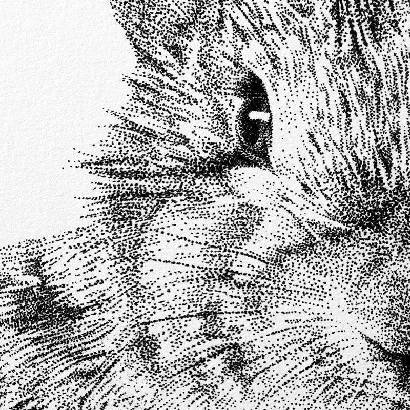 detail Fine Forest illustratie europees konijn