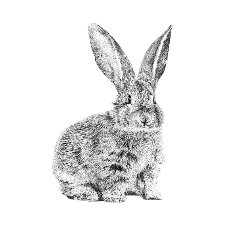 Fine Forest muurstickers, illustratie europees konijn