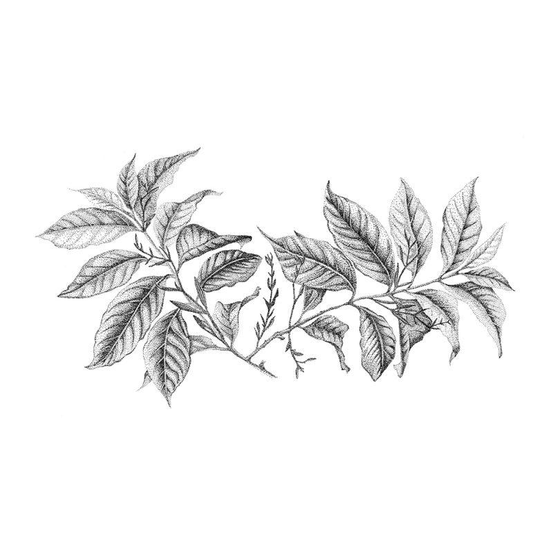 Fine Forest muurstickers, illustratie koffieplant