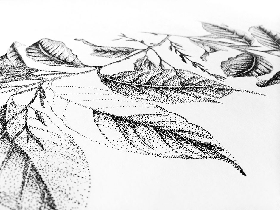 detail Fine Forest illustratie koffieplant