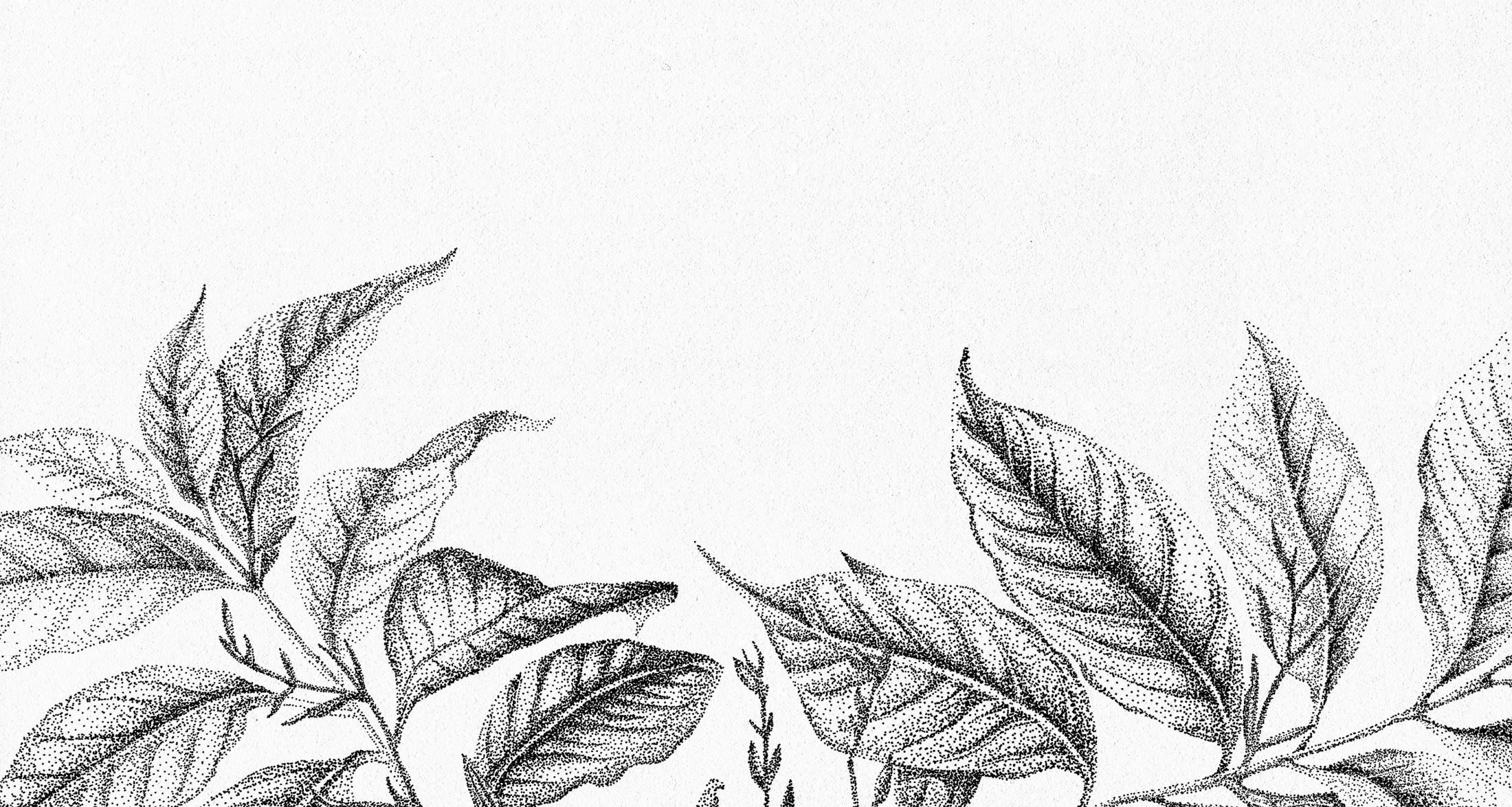 Botanische illustratie plant Fine Forest transparante muurstickers