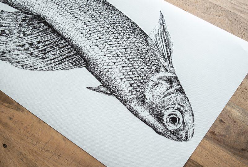 Zalm vis Fine Forest dieren muursticker
