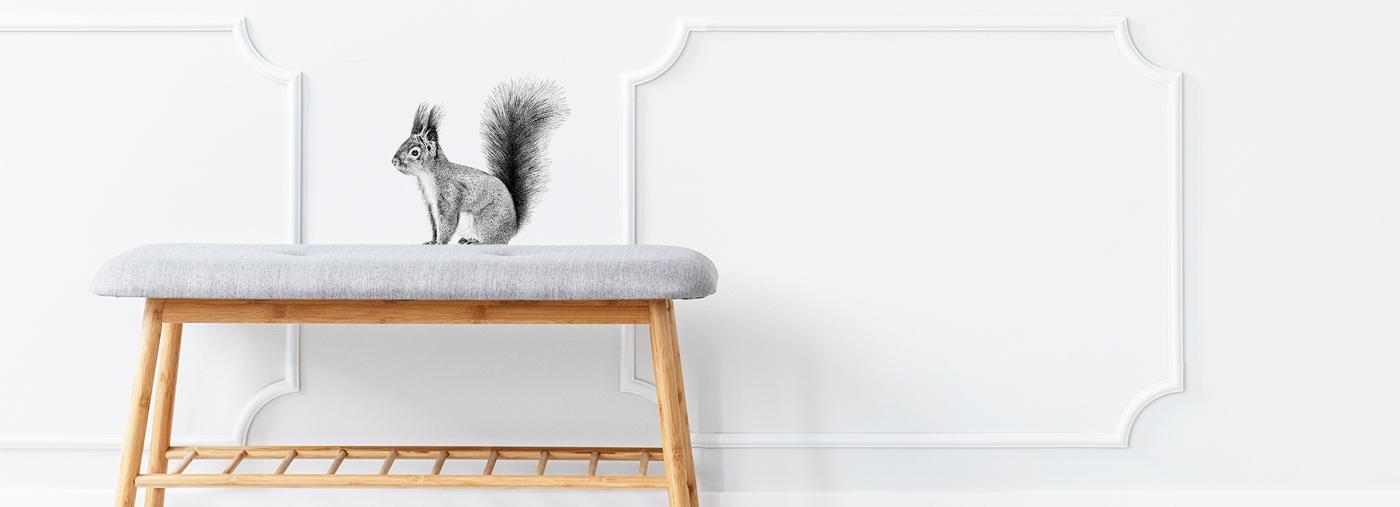 Fine Forest illustratie eekhoorn muursticker bankje
