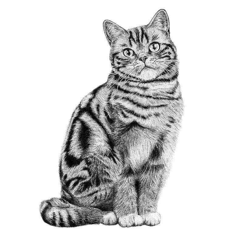 Fine Forest illustratie kat, Britse korthaar, muurstickers, muurdecoratie