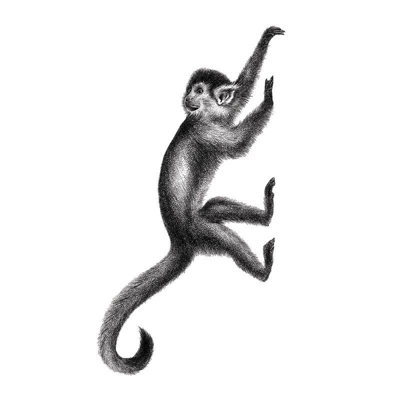 Muursticker aapje, Fine Forest